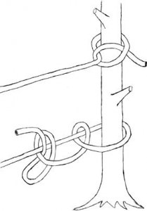 halfhitch