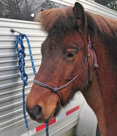 Tying Your Horse Northwest Horse Source Jan 2012